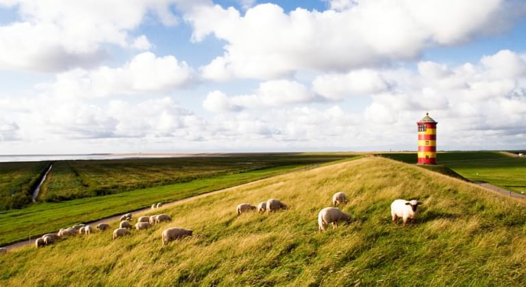Schafe vor dem Pilsumer Leuchtturm